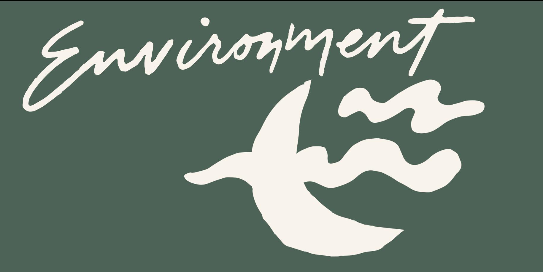 The Environment Sleep Factor: external elements