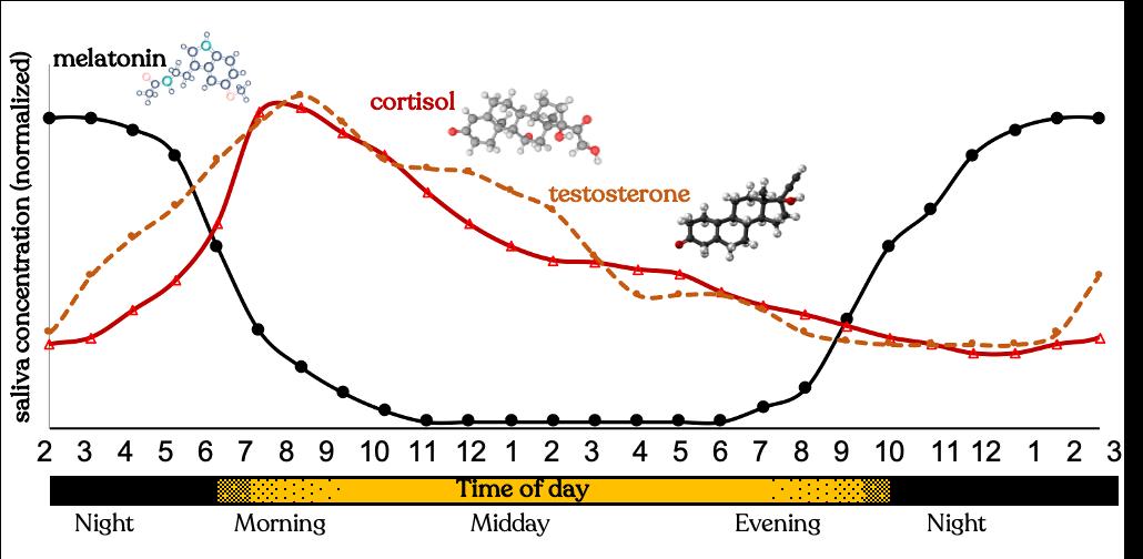 Science of how your hormones impact your sleep & wake
